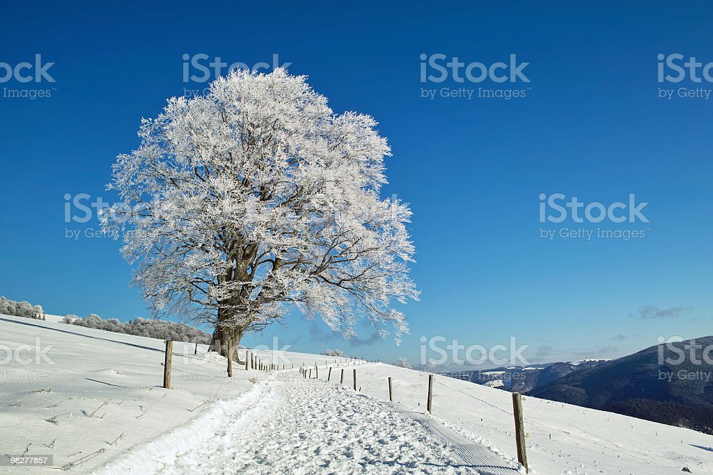 winter landscape with beech tree trail front of blue sky royalty-free stock photo