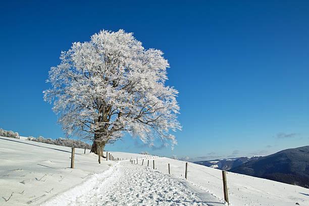 winter-Landschaft mit Buche trail vor blauem Himmel – Foto