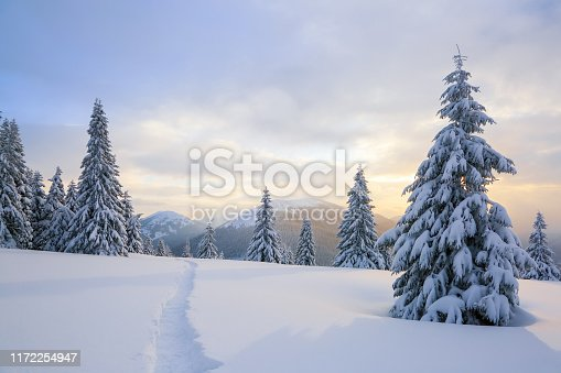 Winter landscape with fair trees, mountains and the lawn covered by snow with the foot path.