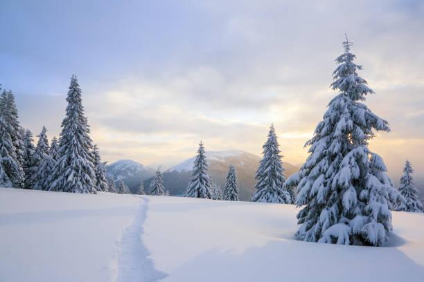 vinterlandskap med rättvisa träd, berg och gräsmattan täckt av snö med fotleden. - snötäckt bildbanksfoton och bilder