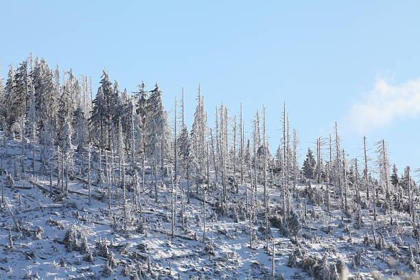winter-Landschaft mit Tannen und white snow – Foto