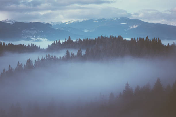 winter landscape with fog - low contrast stock pictures, royalty-free photos & images