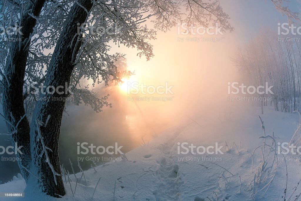 Winter landscape with foggy river in sunny morning royalty-free stock photo