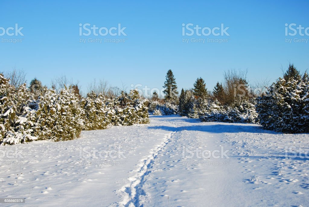 Winter landscape with footprints in a footpath stock photo