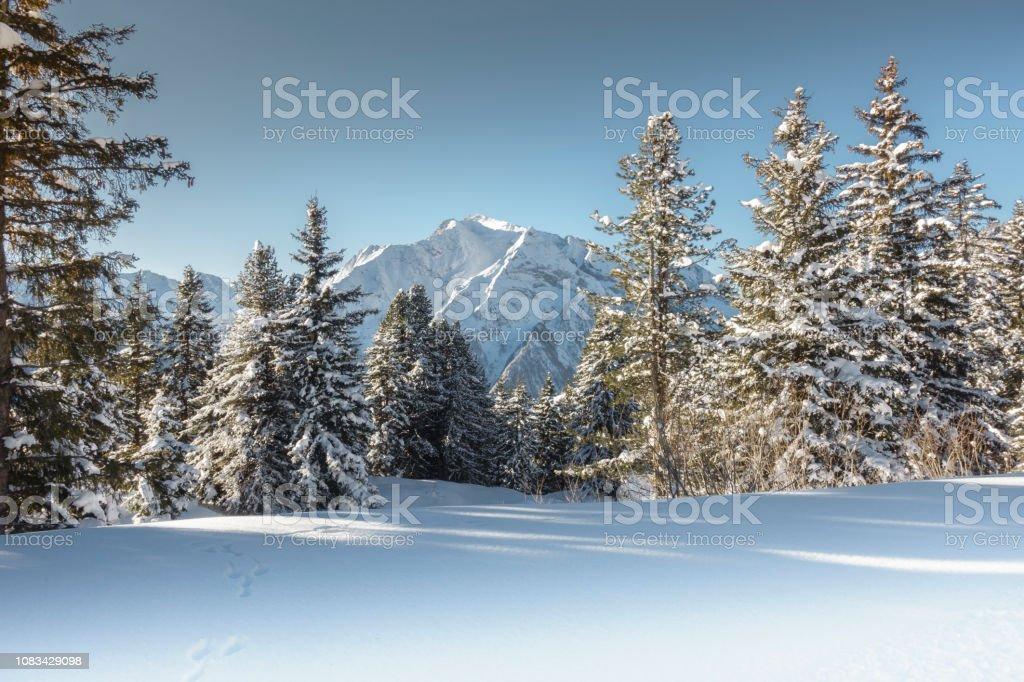 Winterliche Landschaft mit Wald und Gebirge im Hintergrund – Foto