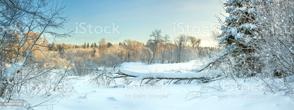 winter landscape with forest in snow, panorama stock photo