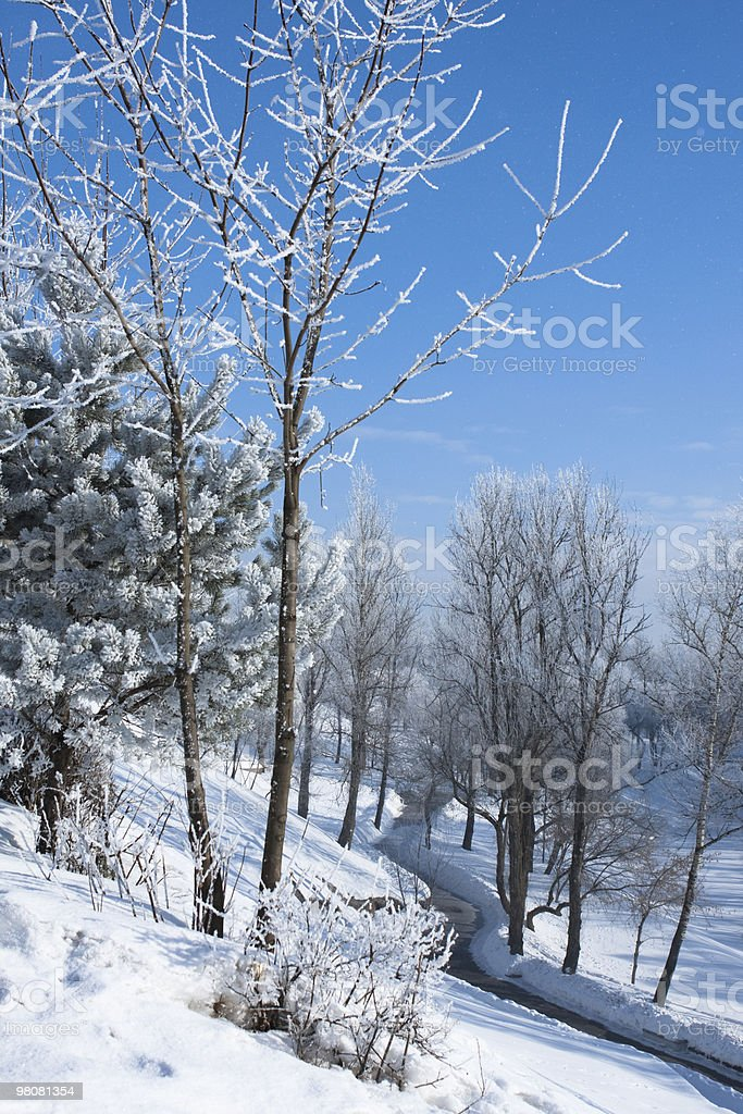 winter landscape with frost royalty-free stock photo