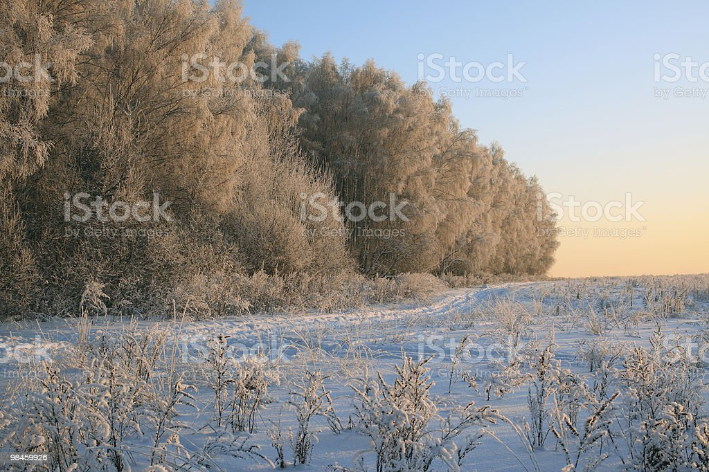 Winter landscape with frosty trees in sunset light, Moscow (Russia) royalty-free stock photo
