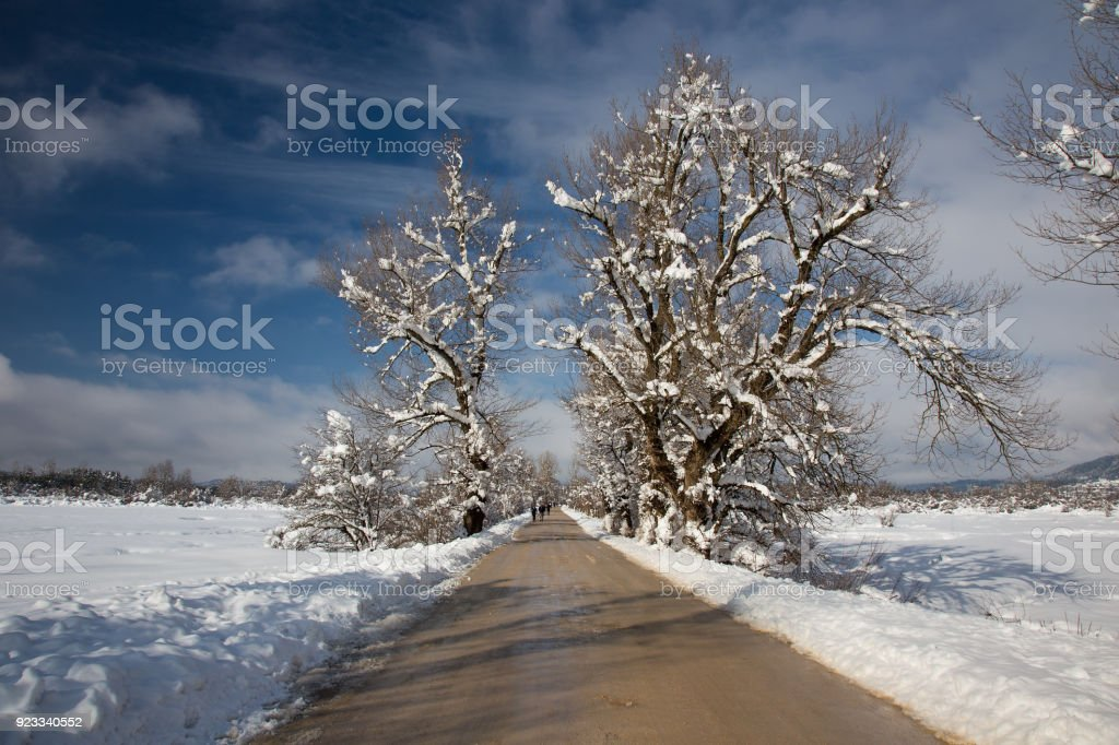 Winter landscape with hiking road near snowy lake Cerknica, Slovenia stock photo