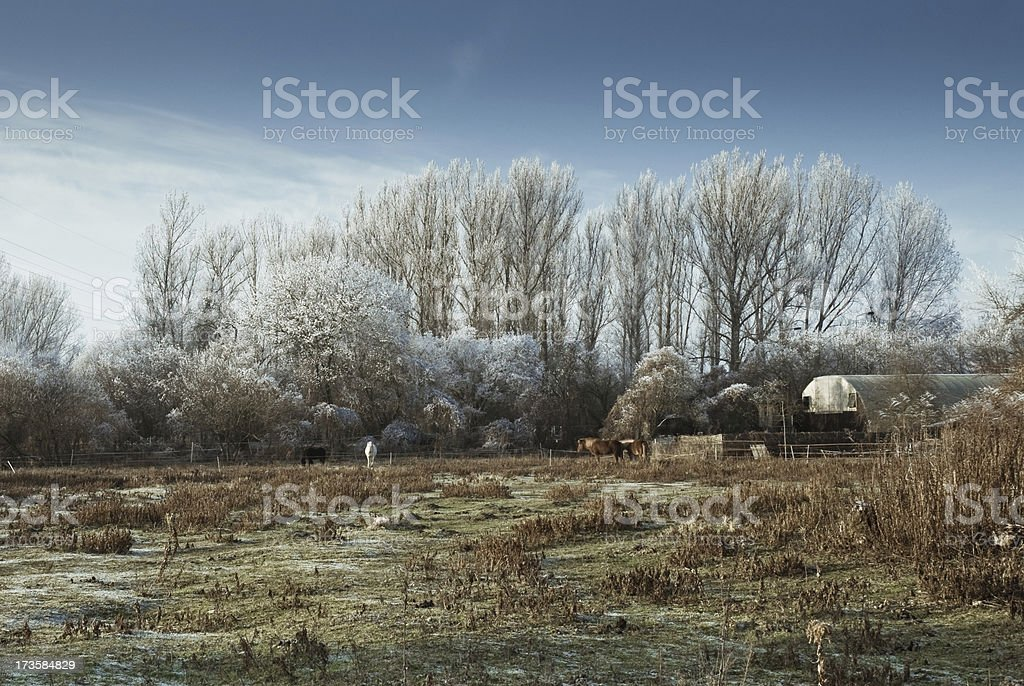 Winter landscape with horses royalty-free stock photo