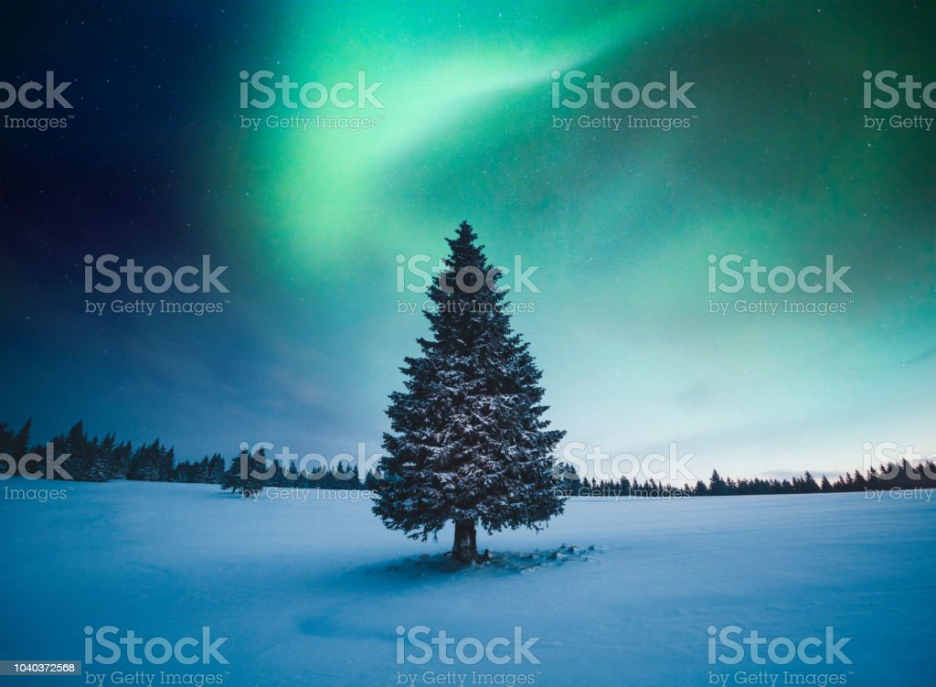 christmas tree arctic finland norway atmospheric mood winter landscape with northern lights