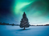 Snowcapped tree under the beautiful night sky with colorful aurora borealis.