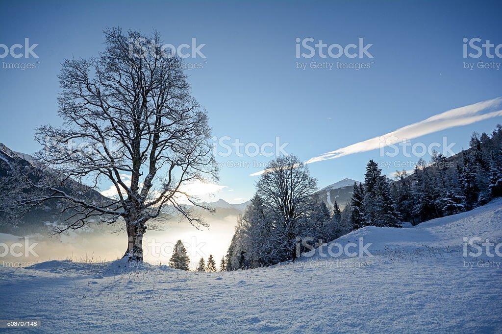 Winter landscape with old trees Pongau Alps - Salzburg Austria stock photo