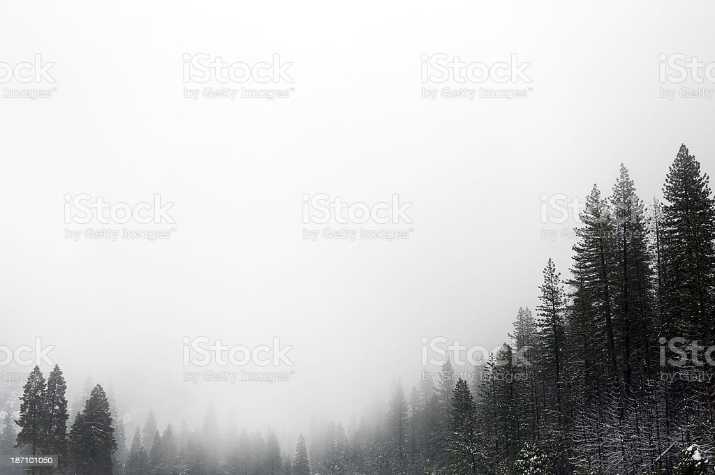 Winter Landscape with Pine Trees royalty-free stock photo
