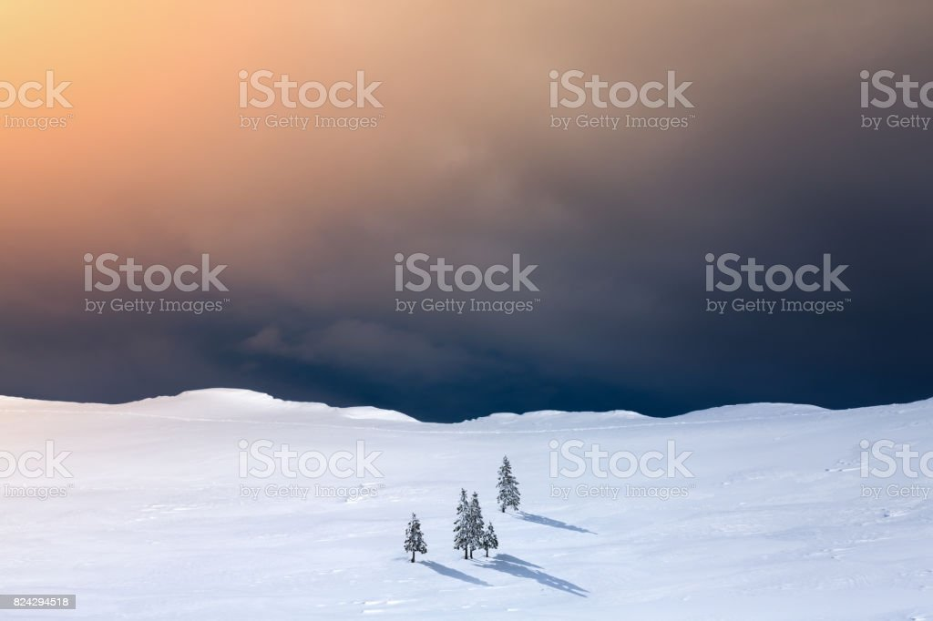 Winter Landscape With Pine Trees stock photo