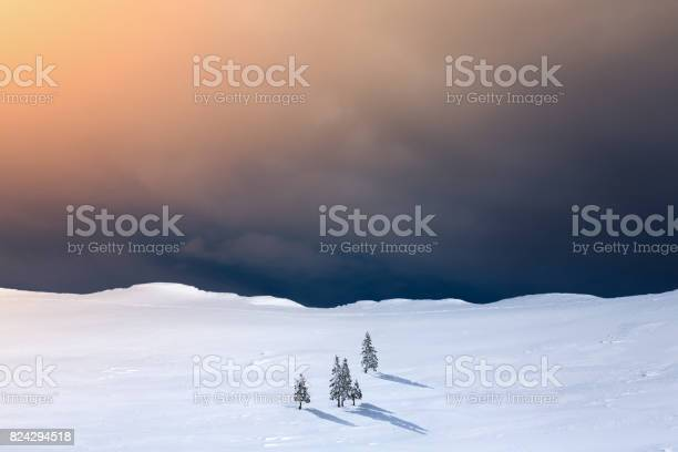 Photo of Winter Landscape With Pine Trees