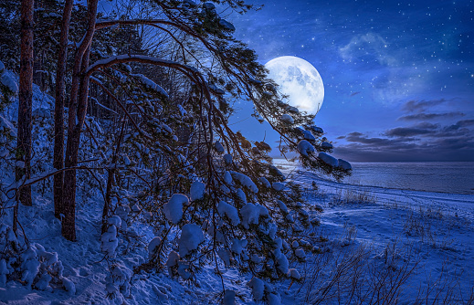 Winter landscape with sea and covered in snow pine trees in moonlight against starry night sky and full moon. Snowy sea coast.