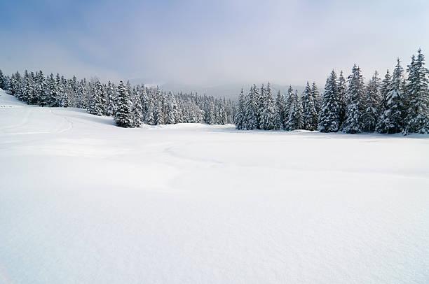 paisaje de invierno con nieve y árboles - nieve fotografías e imágenes de stock