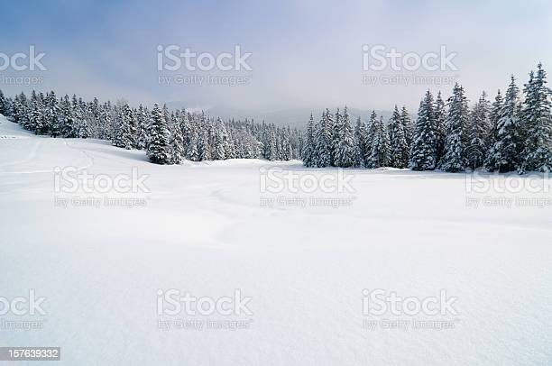 Photo of Winter Landscape with Snow and Trees