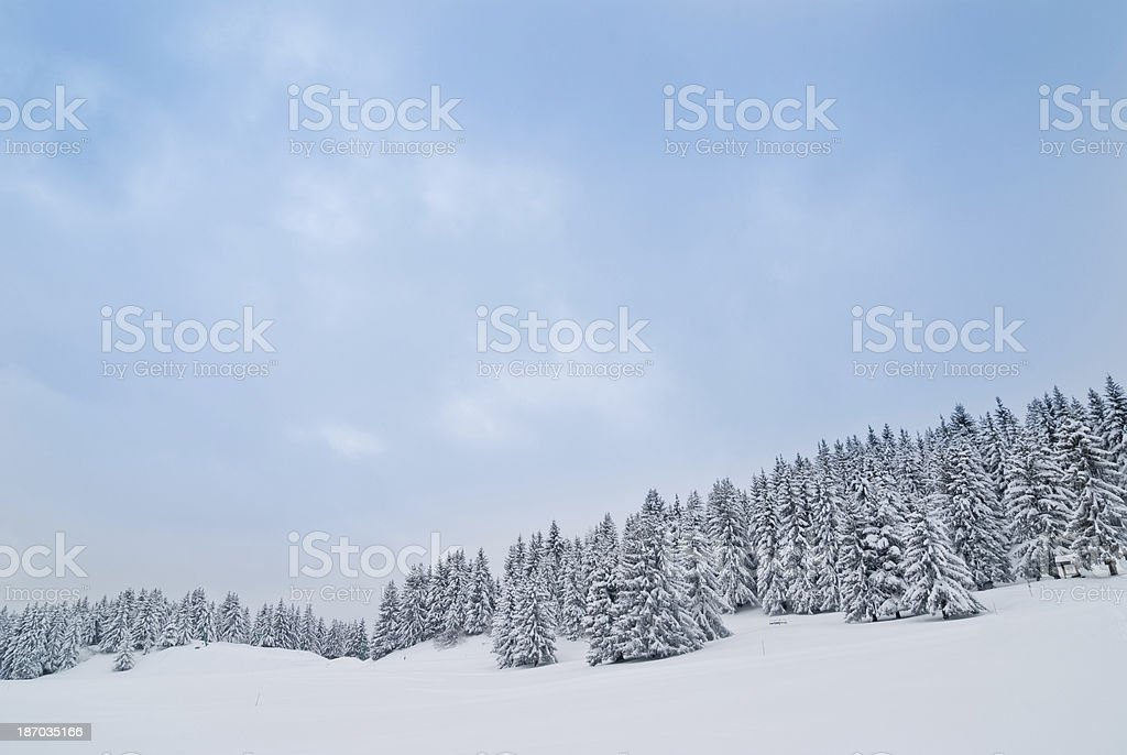 Winter Landscape with Snow and Trees royalty-free stock photo