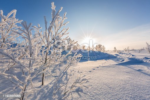Winter landscape with snow-covered trees and sun, Norway