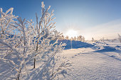 istock Winter landscape with snow-covered trees and sun, Norway 1190692055