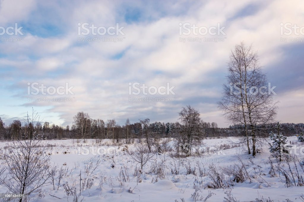 Winter landscape with snow-covered trees on a frosty December day. стоковое фото