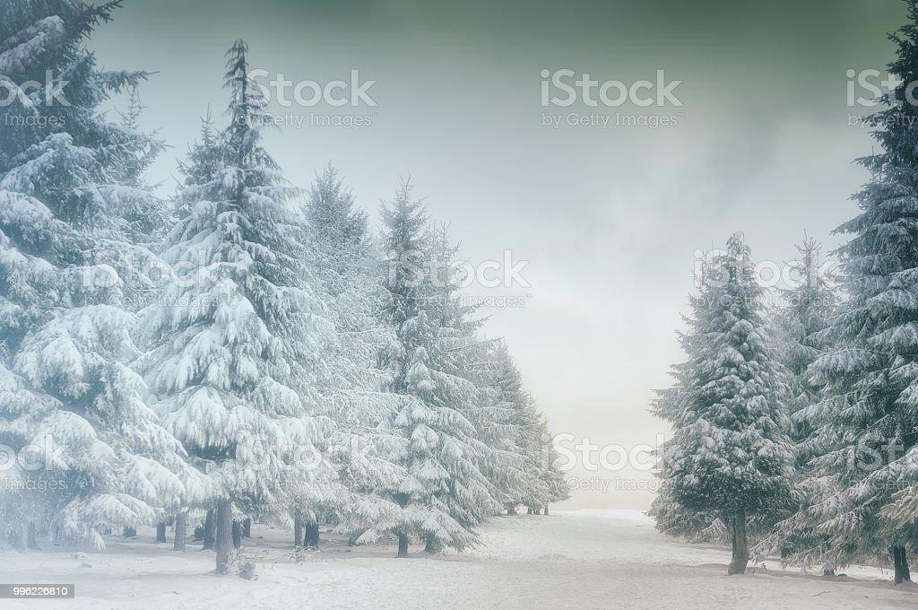 invierno paisaje con árboles de abeto Nevado - foto de stock
