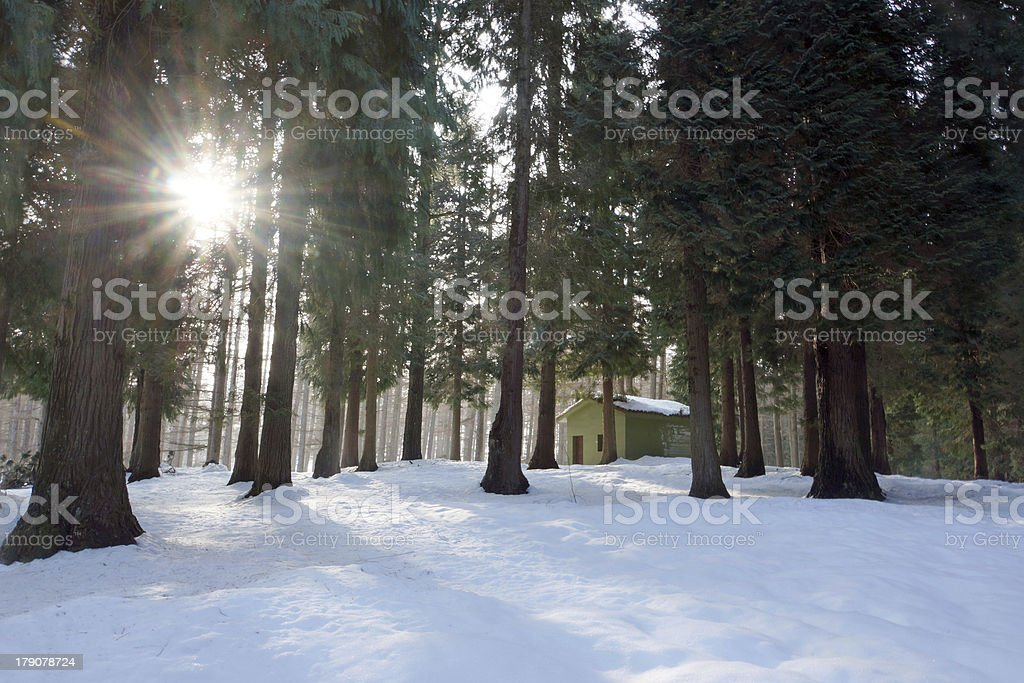 winter landscape with snowy forest a house and starry sun royalty-free stock photo