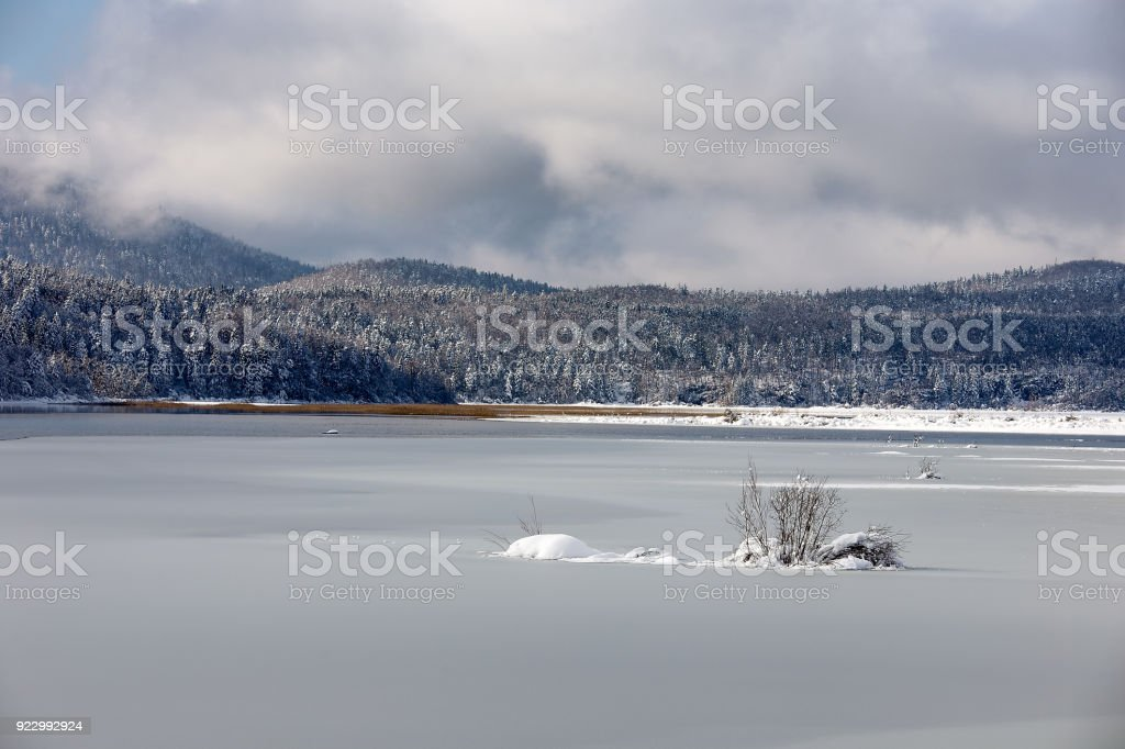 Winter landscape with snowy lake, little bush and snowy spruce trees, Cerknica lake, Slovenia stock photo