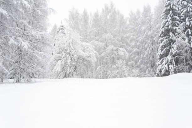 冬の風景、ユキコの木 - 雪景色 ストックフォトと画像