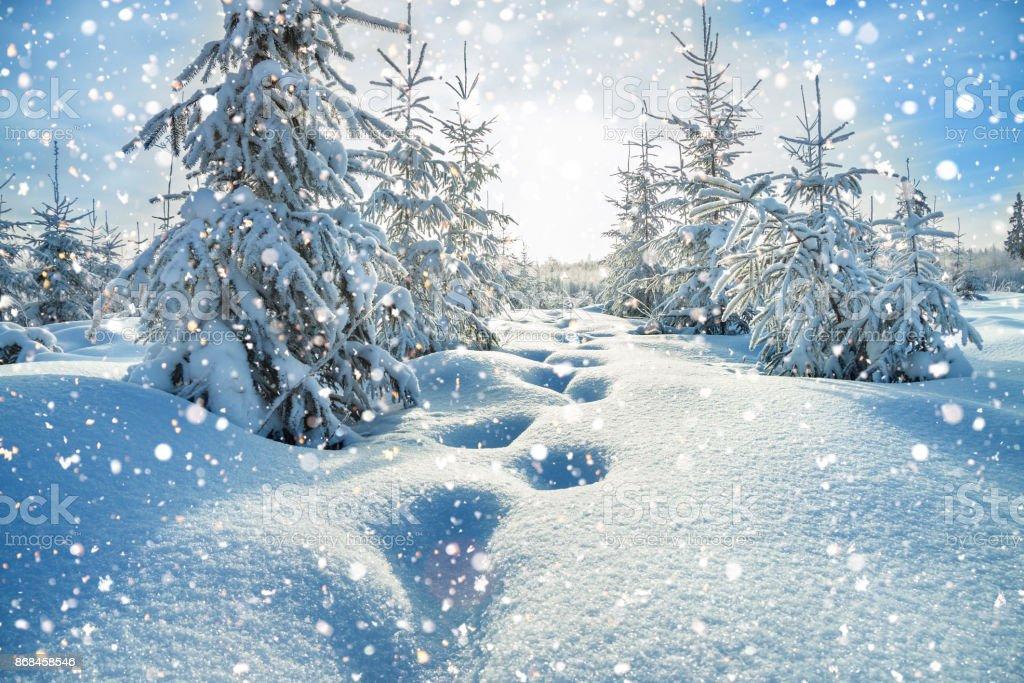 winter-Landschaft mit Wald und blauem Himmel – Foto