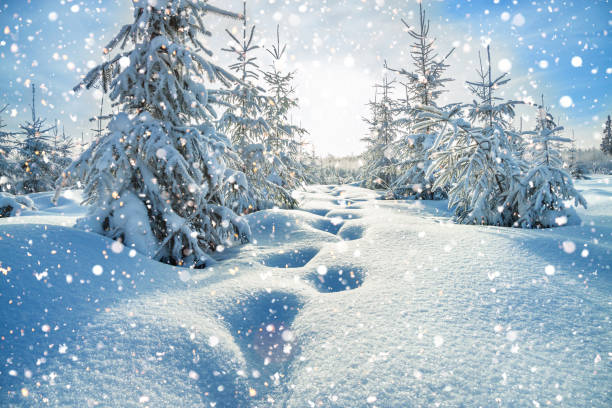 winter-landschaft mit wald und blauem himmel - schneeflocke sonnenaufgang stock-fotos und bilder