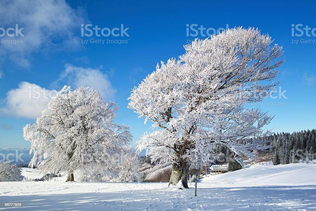 Paesaggio invernale con albero a Schauinsland Foresta nera foto stock royalty-free