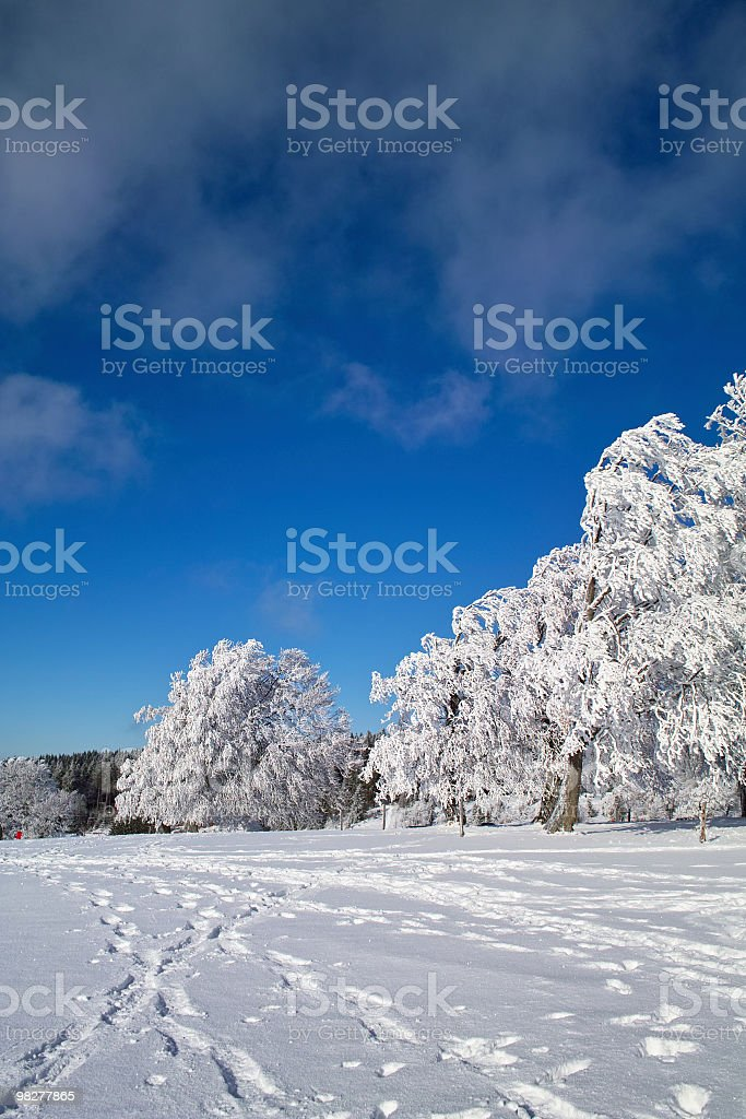 winter landscape with tree at Schauinsland Black Forest royalty-free stock photo