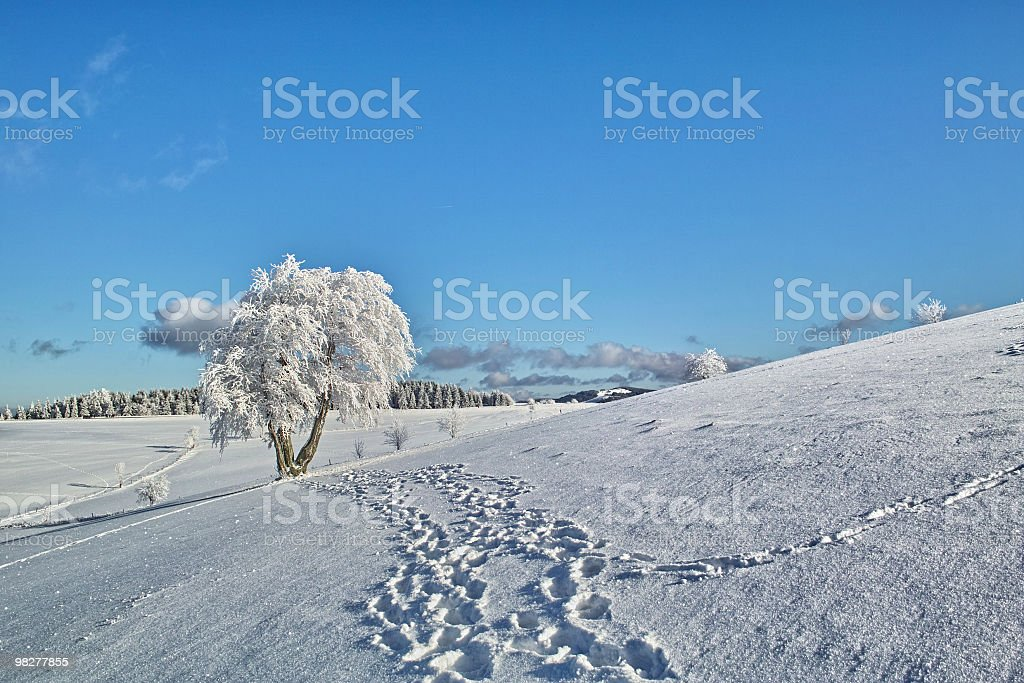 winter landscape with tree at Schauinsland royalty-free stock photo