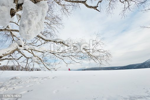 Winter landscape with tree branches and hiker.