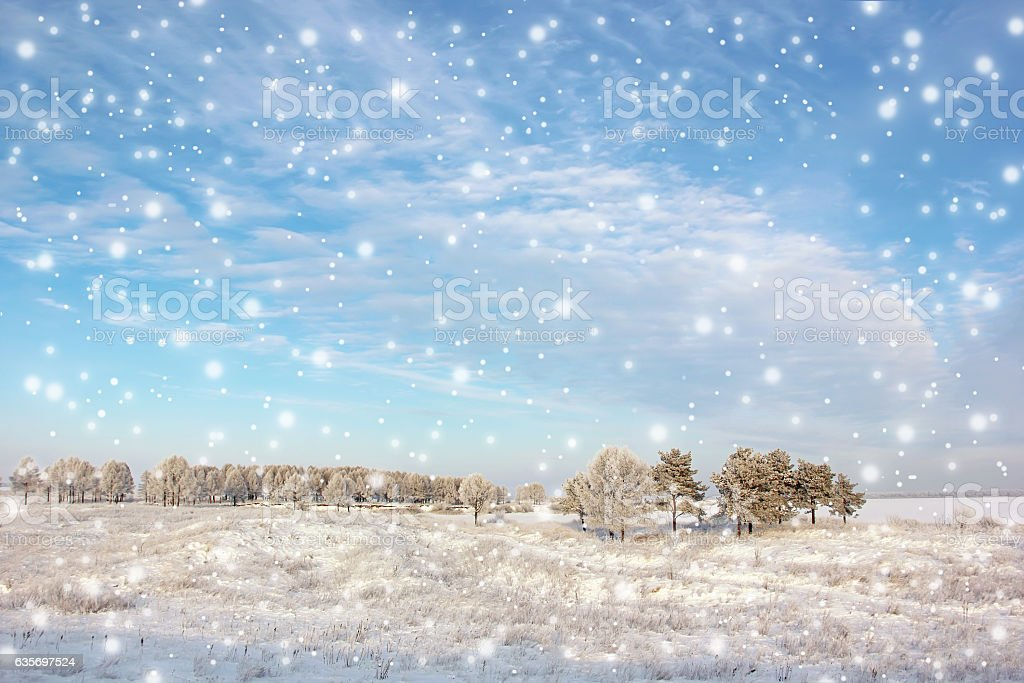 Winter landscape with trees and falling snow. stock photo