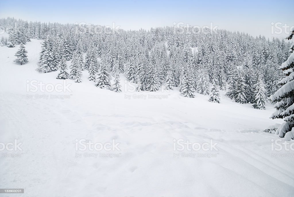 Winter Landscape with Trees and Snow royalty-free stock photo