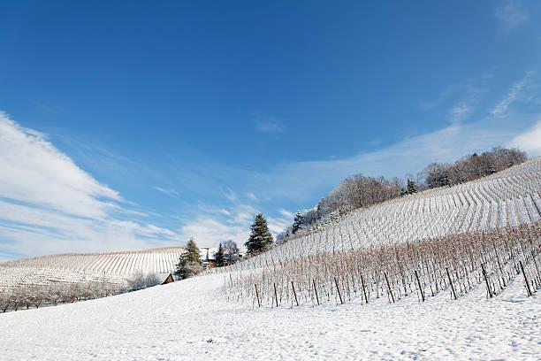 winter-Landschaft mit Weinberg – Foto