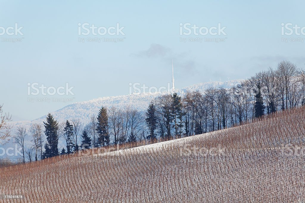 winter landscape with vineyard royalty-free stock photo