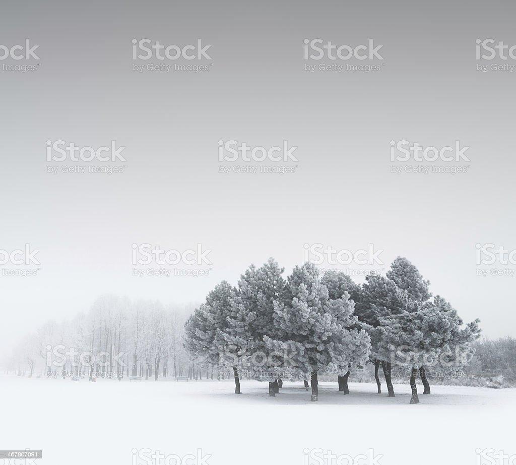 Winter Landscape - XXXL royalty-free stock photo