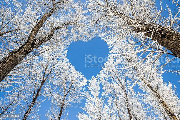 Winter landscapebranches form a heartshaped pattern picture id184195004?b=1&k=6&m=184195004&s=612x612&h=aexs9dxmwfn7al5y5s7kanqszuuexjvr0w0ji1odck4=