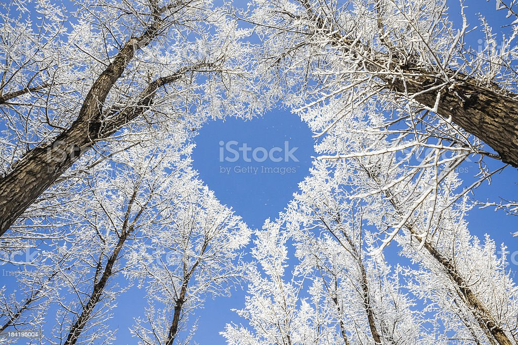 Winter landscape,branches form a heart-shaped pattern stock photo