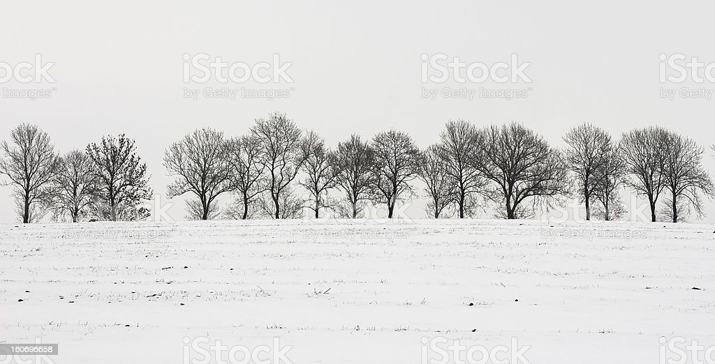 Winter Landscapes: Bare Trees in Field of Snow royalty-free stock photo