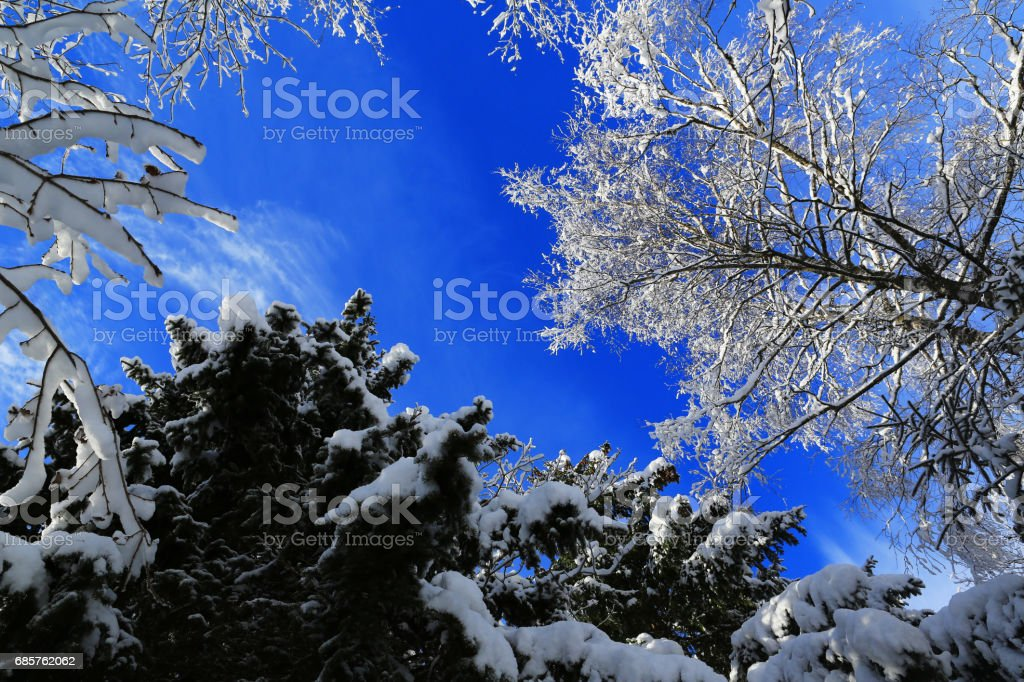 winter landscape-tree branches covered with snow royalty free stockfoto