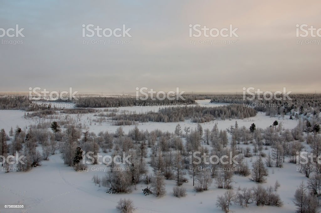 Winter landskape with forest in snow in the evening sunset. North royalty-free stock photo