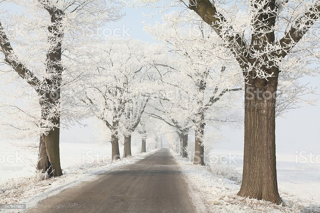 Winter lane in the countryside royalty-free stock photo