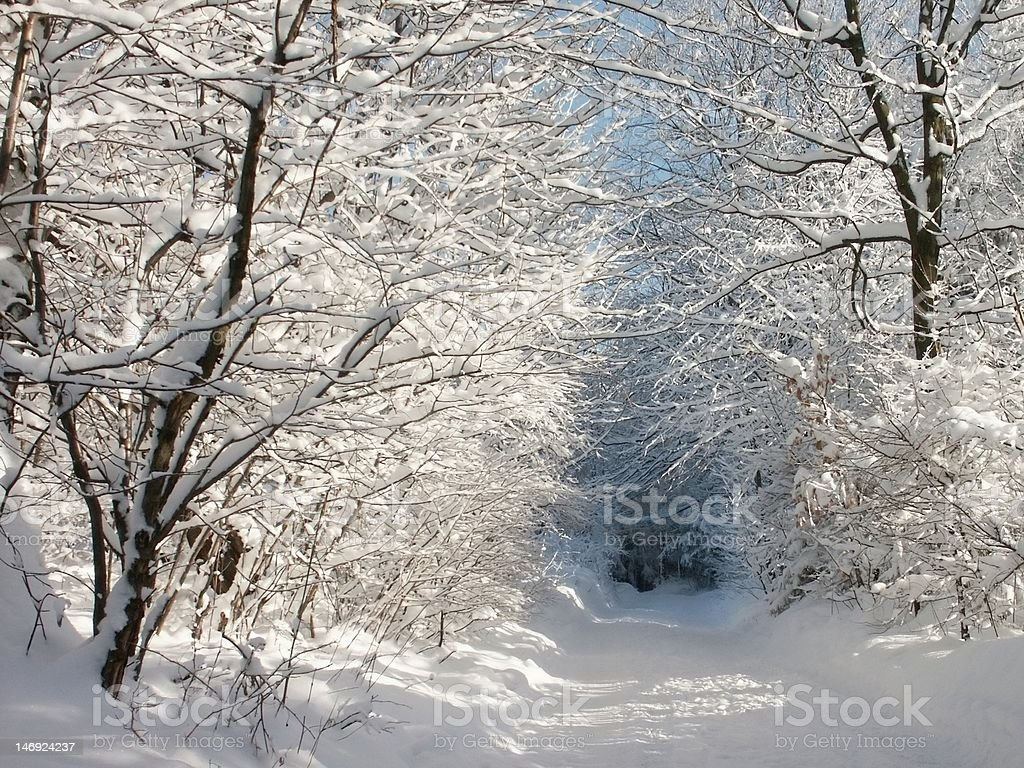 Winter lane in the forest royalty-free stock photo