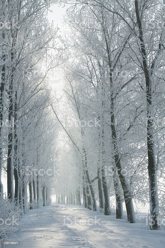 Winter lane stock photo